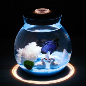 Fish tank set up in an easy way