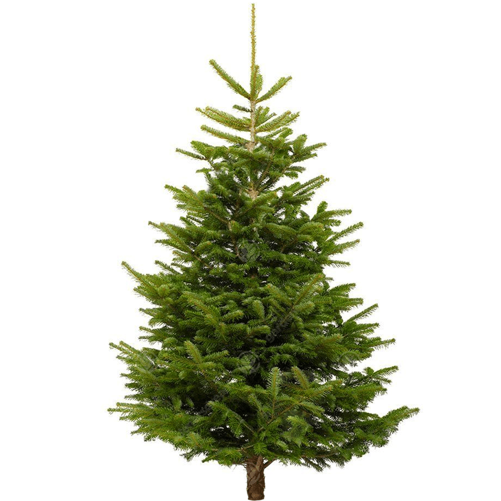 Christmas Tree Selection Guide For Beginners